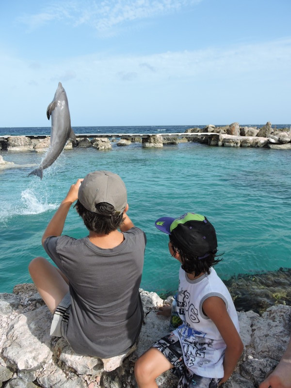 dolphin academy