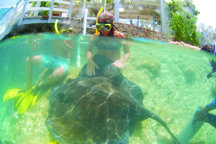 ANIMAL ENCOUNTERS CURACAO